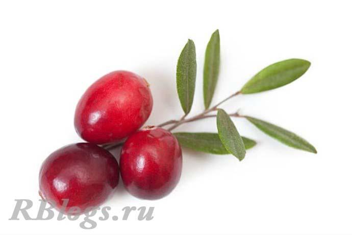 Фото ягод крупноплодной клюквы (Vaccinum macrocarpon)