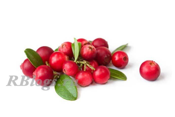 Фото ягод болотной клюквы (Vaccinium oxycoccus)