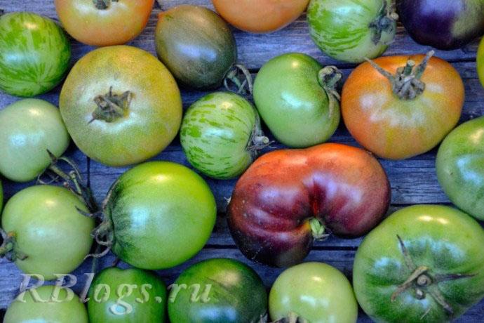 Зеленые помидоры на зимнее хранение