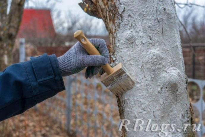 Яблоневое дерево обрабатывают препаратом от насекомых-вредителей