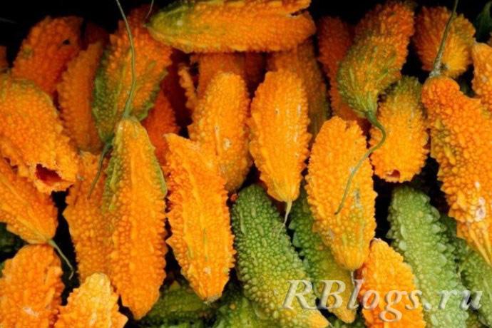 желтые и зеленые плоды момордики